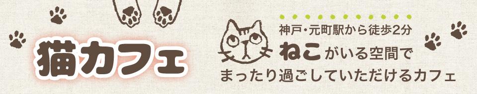 猫カフェ cat cafe nyanny